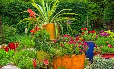 plantas de jardín coloridas