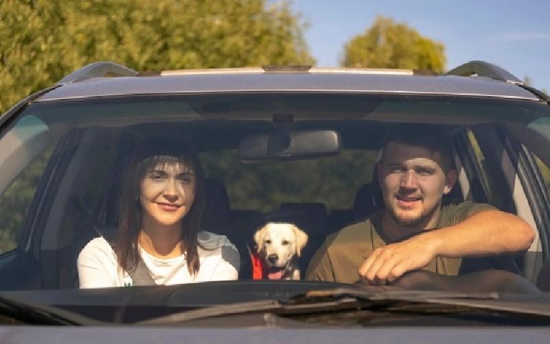 Cómo viajar con una mascota